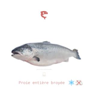 saumon entier broyé