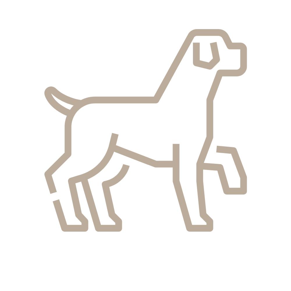 La boutique des chiens